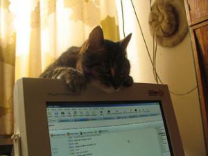 W internecie zawsze ktoś ciebie obserwuje.