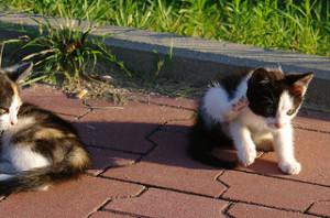 Internetem władają koty, nawet jak się tylko drapią