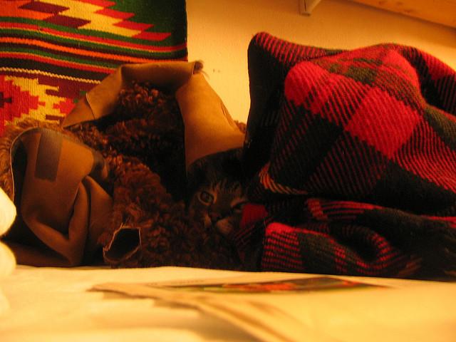 Kot zawsze znajdzie miejsce do ukrycia się przed niepowołanym wzrokiem!