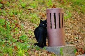 Skoro Siedem życzeń, to i czarny kot musi być.